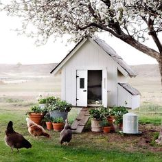 Diy Chicken Coop Plans, Chicken Coops, Chickens In The Winter, Greenhouse Plans, Ivy House, Chickens And Roosters, Chicken Runs, White Chicken, Raising Chickens
