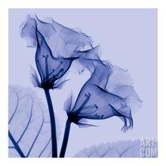 Art.com:view:flowers