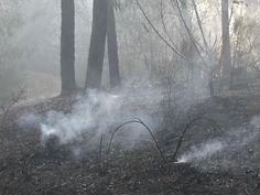 Gargano: piromani in azione anche a Ferragosto - http://blog.rodigarganico.info/2015/cronaca/gargano-piromani-in-azione-anche-a-ferragosto/