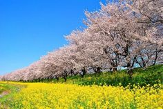 さくら堤公園 Japan Spring, Love Spells, Flower Beds, Garden Plants, Vineyard, Trail, Around The Worlds, Country Roads, Nature