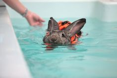 This adorable bunny likes to go swimming because it helps her arthritis.