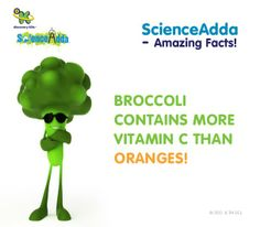 About Broccoli