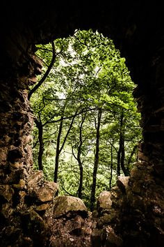 Portal to the Enchanted Forest