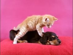 Healing Touch 101 – Massage For Health Cute Animal Videos, More Cute, Cat Gif, Cats And Kittens, Funny Cats, Dog Cat, Cute Animals, Jokes, Puppies