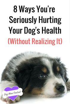 Taking care of a pet isn't easy, and sometimes, despite our best intentions, we accidentally do things that are detrimental to our dog's health. Make sure you don't do these 8 things.