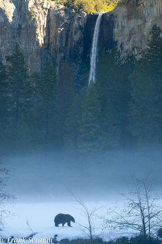 Black bear below Bridalveil Falls , Yosemite , California via flickr