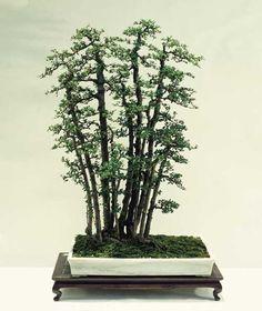 Bosque Common Jasmin Orange (Murraya Paniculata)