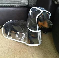 Daschund raincoat - Tap the pin for the most adorable pawtastic fur baby apparel! You'll love the dog clothes and cat clothes! <3