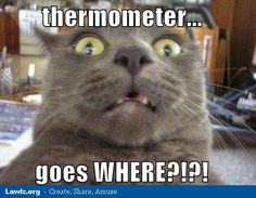 funny cat meme | thermometer-goes-where-funny-cat-meme.jpg?fit=600%2C9999