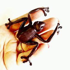 Presa!!! Questa Cioccorana mi stava scappando  guarda le stories ... ora che non è cotta sembra una rana vera!!  Di cioccolato fondente! Me la mangerei !     #archidee #becreative #bepositive #cioccorana #chocofrog #chocolatefrog #harrypotter #harrypotterfanart #hogwarts #frog #instafrog #chocolatefrogs #polymerclay #pastapolimerica #pastepolimeriche #fimo #cernit #sculpey #cernitclay #handmade #supporthandmade #crafting #cioccolato #chocolate #potteriano #fimocreations