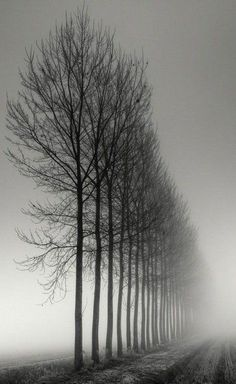Landscapes Tree Photography by Pierre Pellegrini De la serie: Bruma ITree Photography by Pierre Pellegrini De la serie: Bruma I Tree Photography, Amazing Photography, Landscape Photography, Photography Composition, Exposure Photography, Digital Photography, Landscape Photos, Photography Ideas, Ansel Adams Photography