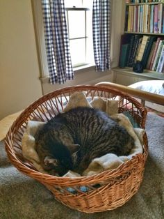 Tabitha in Her Cat Basket | Content in a Cottage