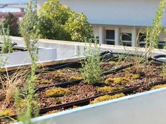 The NativeScapeGR Project Encourages Green Roofing with Native Species | Inhabitat - Sustainable Design Innovation, Eco Architecture, Green Building