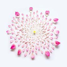 Arte com flores por Fong Qi We | Criatives | Blog Design, Inspirações, Tutoriais, Web Design