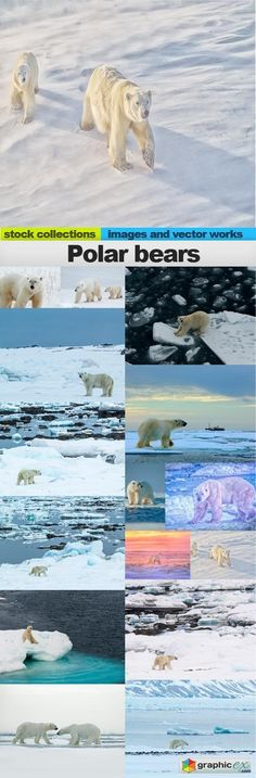 Polar bears15 x UHQ JPEG  stock images