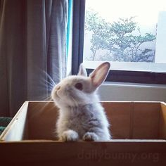♥ Small Pets ♥  Pet rabbit