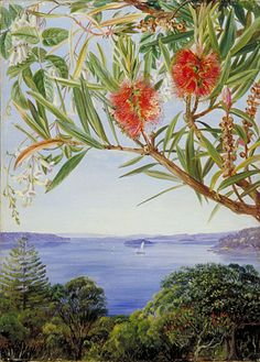 Two Australian Shrubs and Sydney Harbour, oil painting, 1880s, by Victorian traveller and artist Marianne North #women #travel