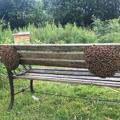 The two? Swarms of #bees that turned up on my seat two weeks ago @sheffield.honey