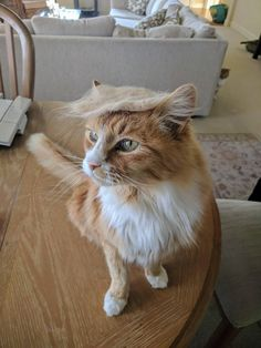 My cat has been feeling presidential lately. http://ift.tt/2mVS3jI