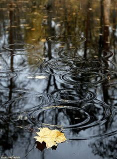 Gif Pictures, Images Gif, Nature Pictures, Rainy Day Photography, Autumn Photography, Cozy Rainy Day, Rain Gif, Rain Wallpapers, I Love Rain