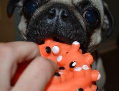 My toy! My toy! My toy!