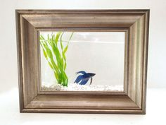 Framed Fish Tank If I ever get a Betta, I am totally doing this!