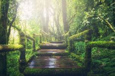 Allah'a Giden Yol Forest View, Forest Path, Hanging Curtains, Relaxing Music, Belle Photo, Free Pictures, Pictures Images, Nature Pictures, Pathways