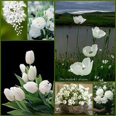~Katarina~Collage by Miss Katarina Beautiful Monday, Beautiful Collage, Love Flowers, White Flowers, Beautiful Flowers, Collages, Mood Colors, Colours, Pot Pourri