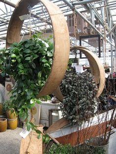 love plants in big giant 'rings'