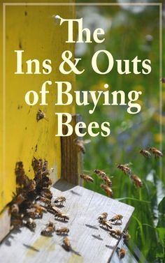 Buying Bees Every spring potential beekeepers begin to get excited about starting to keep bees. They read beekeeping books and articles, and talk to experienced beekeepers about everything from setting up their apiary to buying bees. Beekeeping Books, Backyard Beekeeping, Drone Bee, Beekeeping For Beginners, Raising Bees, Bee Farm, In & Out, Save The Bees, Beekeeping