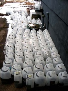 Over 50 plastic milk jugs here in progress with winter sowing. Wow!