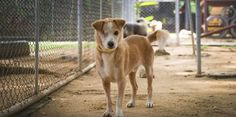 I am 7 years old and I survived as a street dog for over 6 of those. I managed to get by but things took a dark turn, when my eyes got worse to the point that I was almost blind. A kind person saw my struggles and brought me to the Soi Dog shelter here in Phuket, Thailand.  I was a pitiful sight, with a severe eye infection and covered in ticks. Unfortunately it was too late... https://www.facebook.com/SoiDogPageInEnglish/videos/1099110633464004/