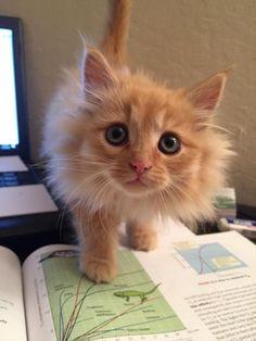 "#Cats  #Cat  #Kittens  #Kitten  #Kitty  #Pets  #Pet  #Meow  #Moe  #CuteCats  #CuteCat #CuteKittens #CuteKitten #MeowMoe      ""No more study"" ...   https://www.meowmoe.com/43414/"