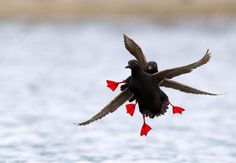 The Flying Tortoise: Beautiful Bird Images From The 2015 Audubon ...