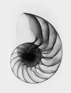 Fibonacci 0, 1, 1, 2, 3, 5, 8, 13, 21, 34, 55, 89, 144, 233, 377, 610, 987, 1597, 2584, 4181....