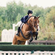 Pinterest ➳ ercequestrian