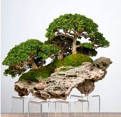 Bonsai display tables are used to highlight the importance of a bonsai tree in exhibits. Although many there are traditional rules, today some stands are unique to the extreme. Modern or traditional they all have the same purpose - show off the bonsai!