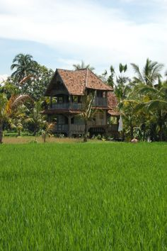 Let me show you wonderful rice fields on an amazing tour of Bali!  www.rudisbalitours.com