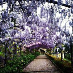 bardini gardens florence italy | Florence Bardini garden