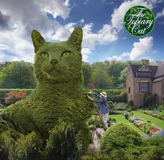 British Artist Creates Beautiful Giant #Cats Sculpted From #Bushes http://ibeebz.com