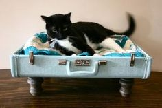 Cats Love to get into luggage when you're packing. Here is one made for them. Upcycle Suitcase Pet Bed Blue by vintagerenaissance on Etsy.