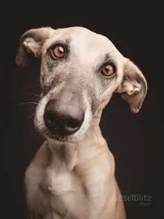 """Try to say """"No"""" to this face by Elke Vogelsang on 500px"""