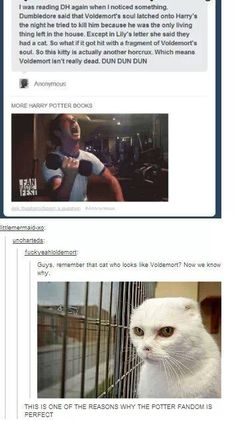 The potter fandom is perfect