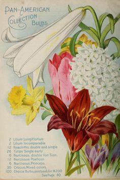 Vick's catalogue : bulbs plants and seeds / James Vicks' Sons