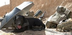 The British Army in Afghanistan Goes to the Dogs Photo by Jamie Peters, 26 Oct. 12