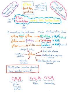Karbonhidratlar Good Study Habits, I Hate School, School Notes, Studyblr, Student Life, Study Motivation, Teaching Math, Biology, Chemistry