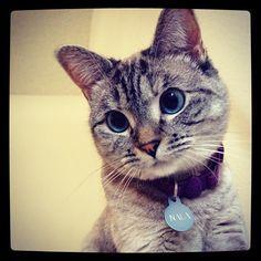 Nala, the instagram cat model