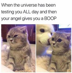 54 Funny Memes To Wrap Up The Weekend. - AWW - - 55 Funny Memes To Wrap Up The Weekend. Look at her eyes after the boop The post 54 Funny Memes To Wrap Up The Weekend. Memes Humor, Funny Dog Memes, Humor Videos, Jokes, Cute Funny Animals, Funny Cute, Cute Cats, Basenji Puppy, Weekend Humor