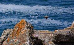 Rinsey cliff near Praa Sands, Cornwall, photo taken by Claire Hawken