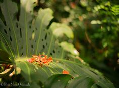 1000 Images About Tropical Plants On Pinterest Plant Identification Tropical Plants And